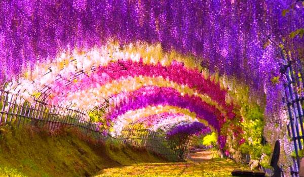 Túnel de las flores