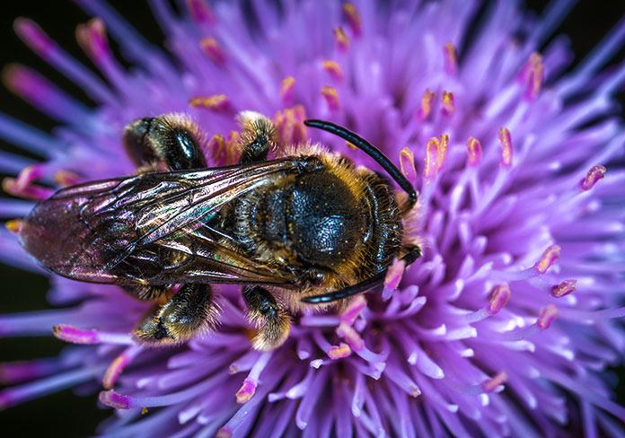 ¿Por qué se debe evitar la extinción de estos insectos?