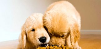 Curiosidades sobre la alimentación de los perros que tal vez no conocías
