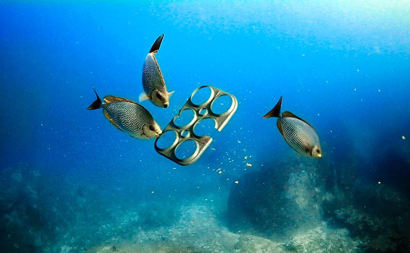 Anillos compostables