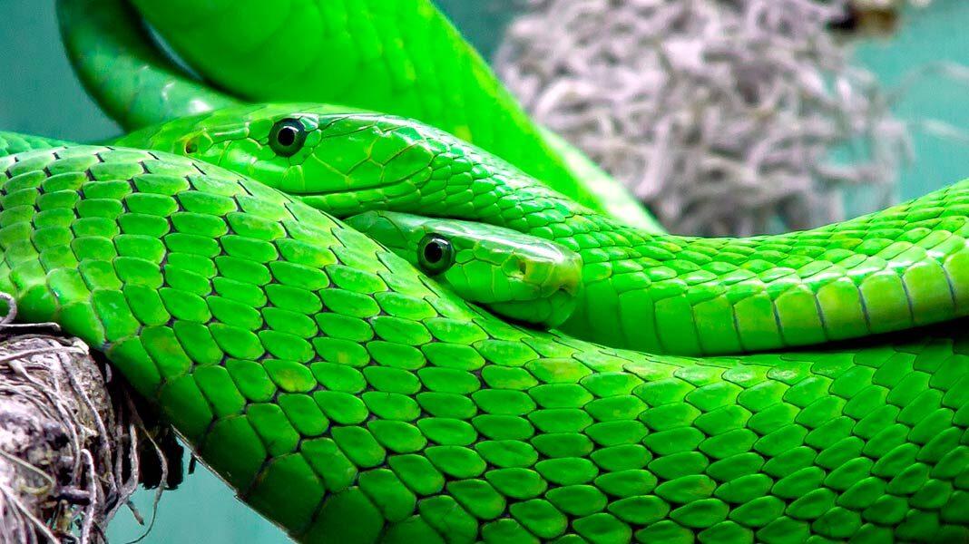 Los animales venenosos más letales del planeta están todos en el mismo lugar