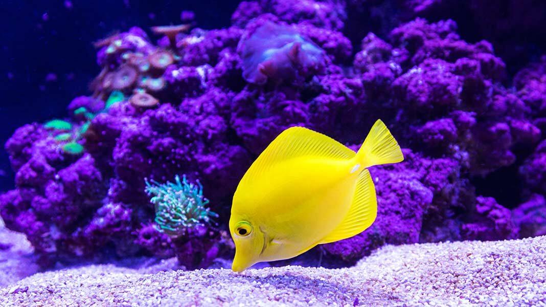 ¿Los peces necesitan beber agua?