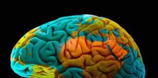 El cerebro olvida intencionadamente