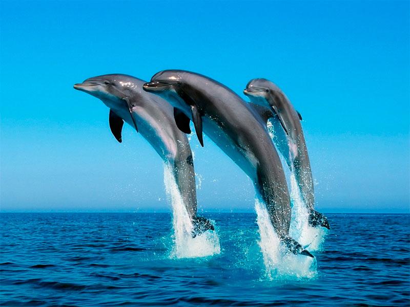 Sitios de España dónde ver delfines