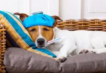 Enfermedades que pueden transmitir nuestras mascotas.