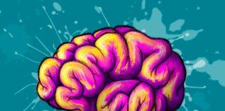 La estructura del cerebro