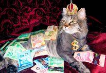 Gato rodeado de dinero y lujos