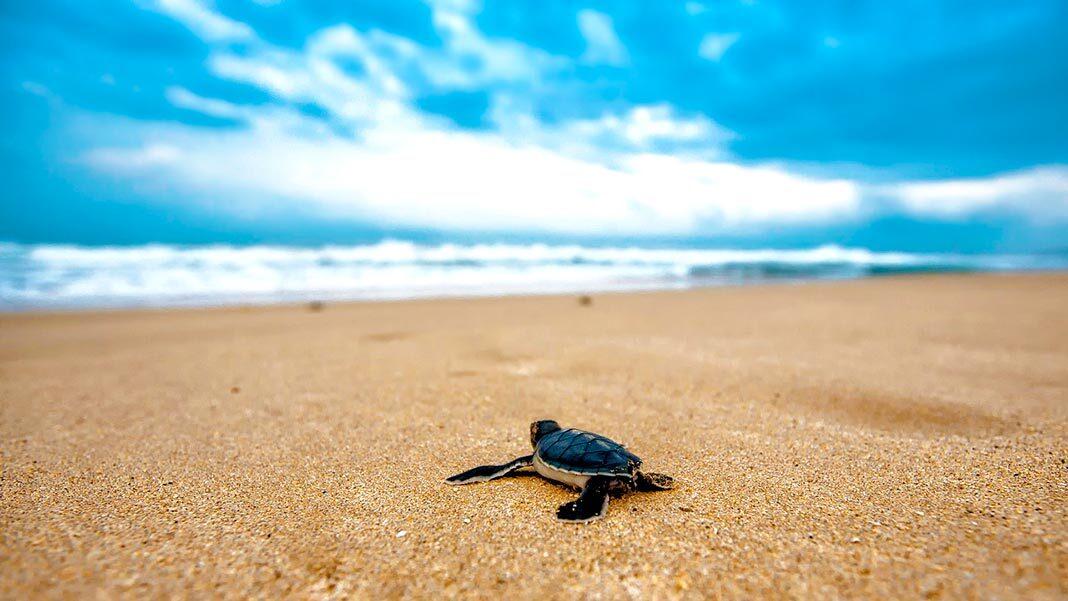 ¿Cuál es el secreto de la longevidad de las tortugas?