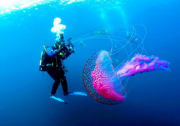 El fascinante funcionamiento de los tentáculos de las medusas