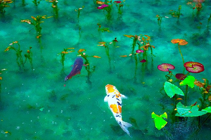 beber agua - peces de agua dulce