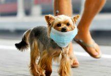 """Los perros que """"fuman"""" mueren más rápido."""