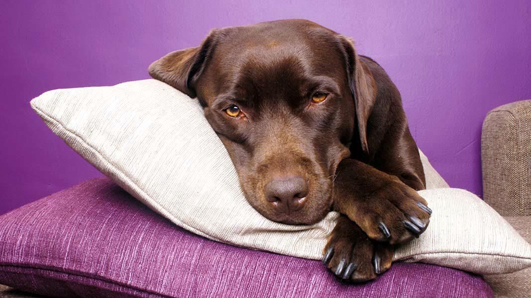 Perros callejeros se salvan del frío gracias a una tienda de muebles