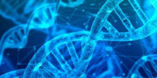 Unos científicos desvelan el misterio de por qué envejecemos