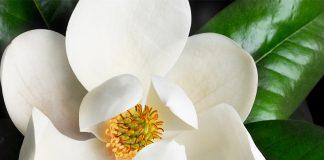 Esta fue la primera flor de la historia.
