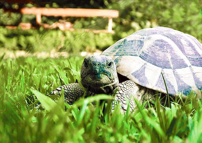 Longevidad de las tortugas terrestres